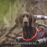 Vizslafotozas__Vajda