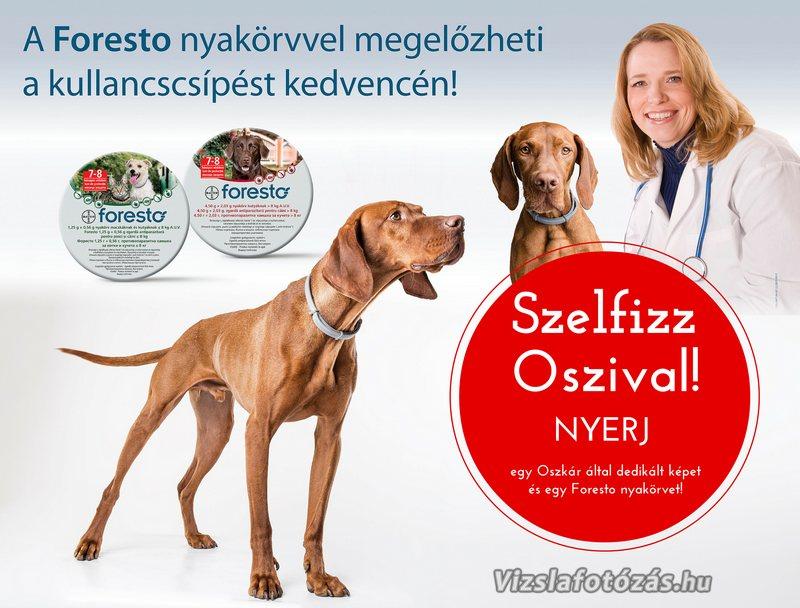 SzelfizzOszival_w