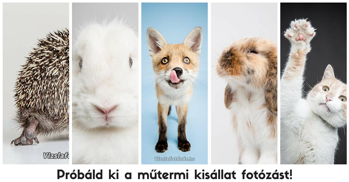 Kisállat fotózás (2)