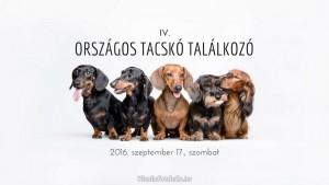 IV_Orszagos_Tacsko_Talalkozo_Vizslafotozas