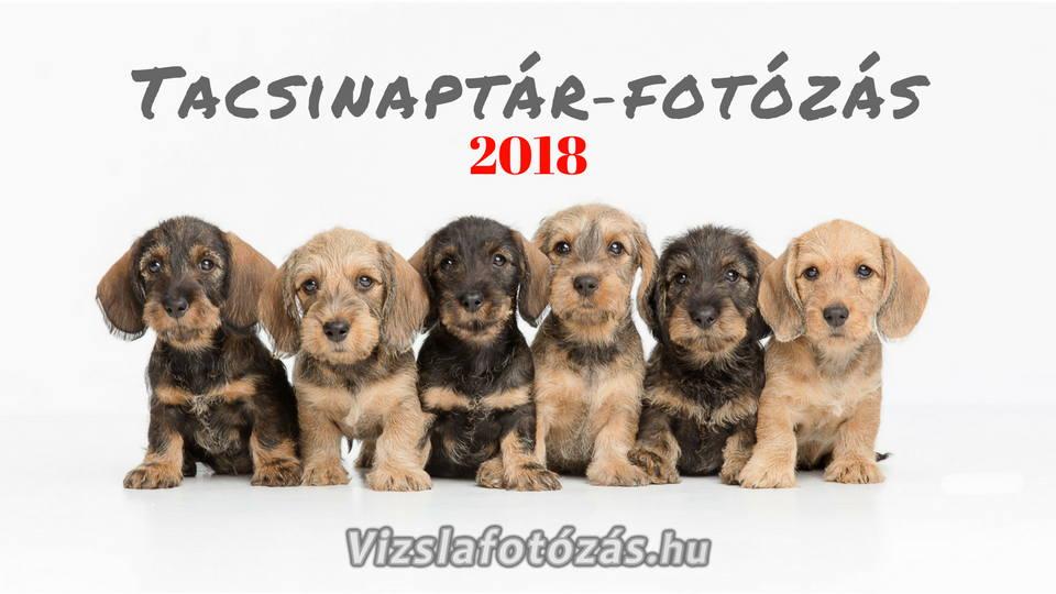 Tacsinaptár 2018